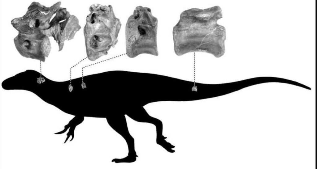 New Species of Dinosaur Discovered - The Wall Post