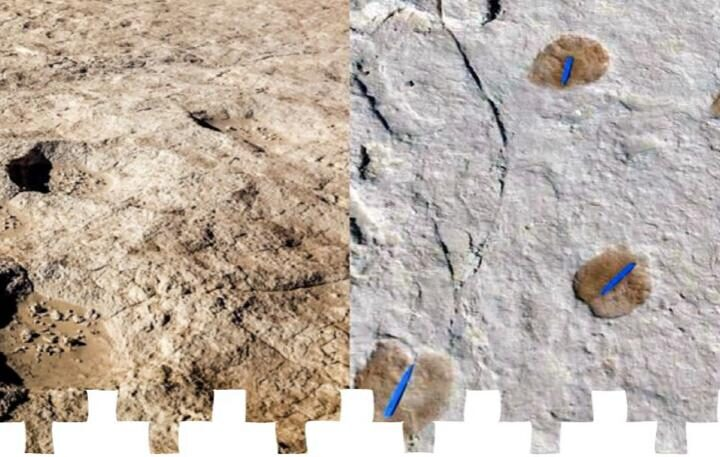1.2 lakh years old Humans and Animals Footprints found - The Wall Post