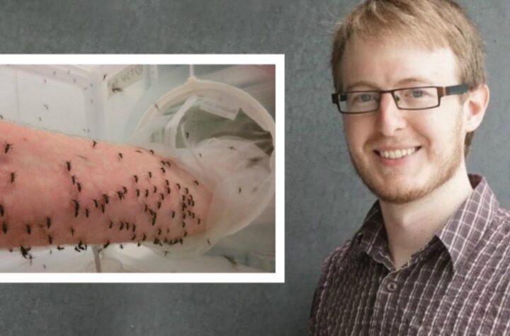 Australian scientist 'Perron Ross', who is doing research on dengue, gets himself bitten by 5000 mosquitoes daily - The Wall Post