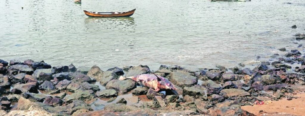 Carcass of dolphin washes ashore a beach in Mumbai - The Wall Post