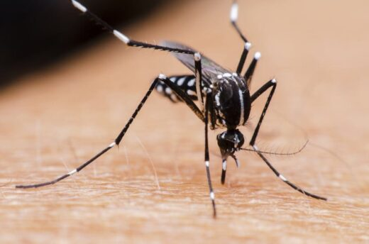 Pune News - Pune District in Maharashtra reports first case of Zika Virus - The Wall Post